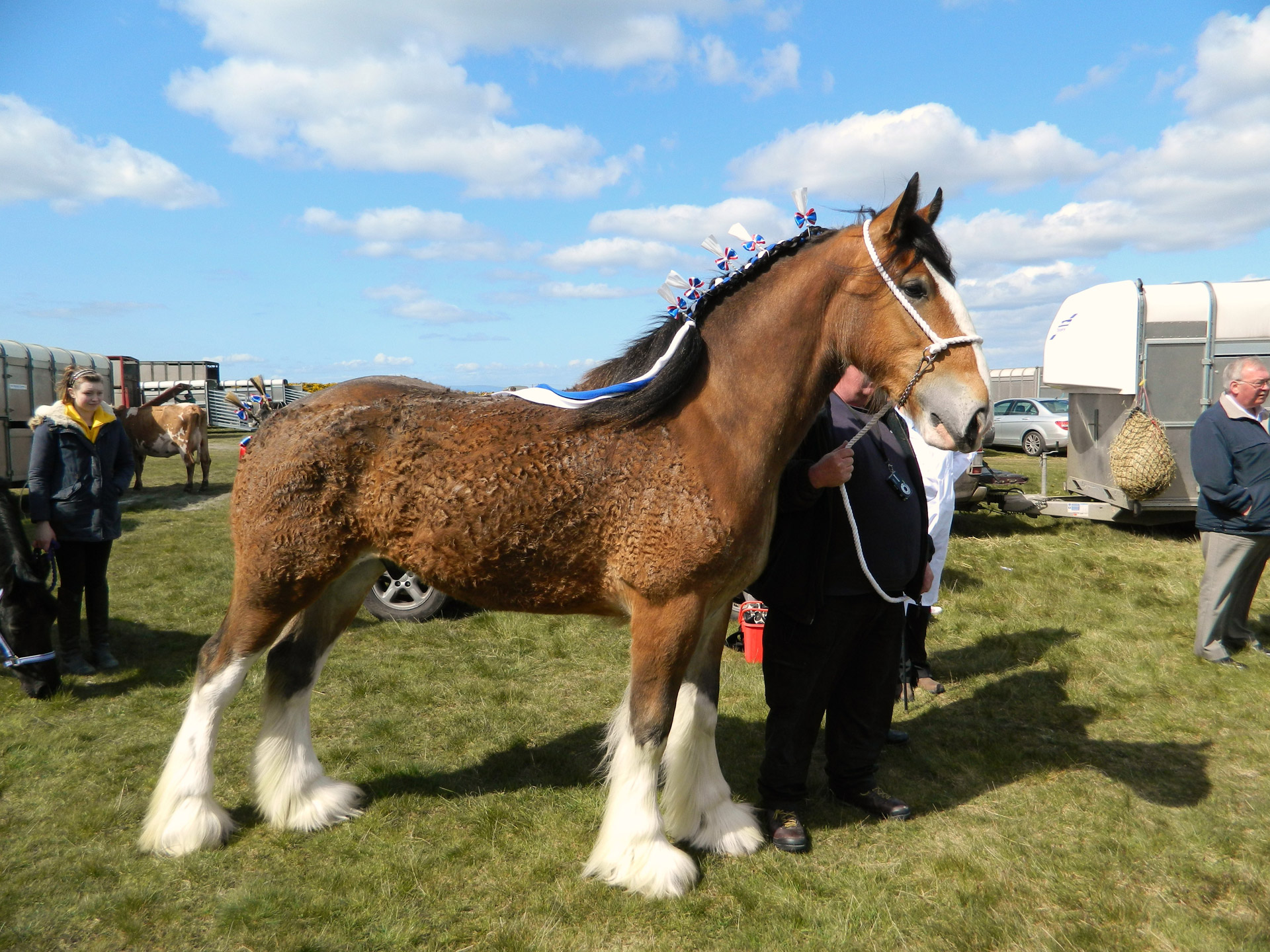 Healthy Clydesdale- What to feed your Clydesdale