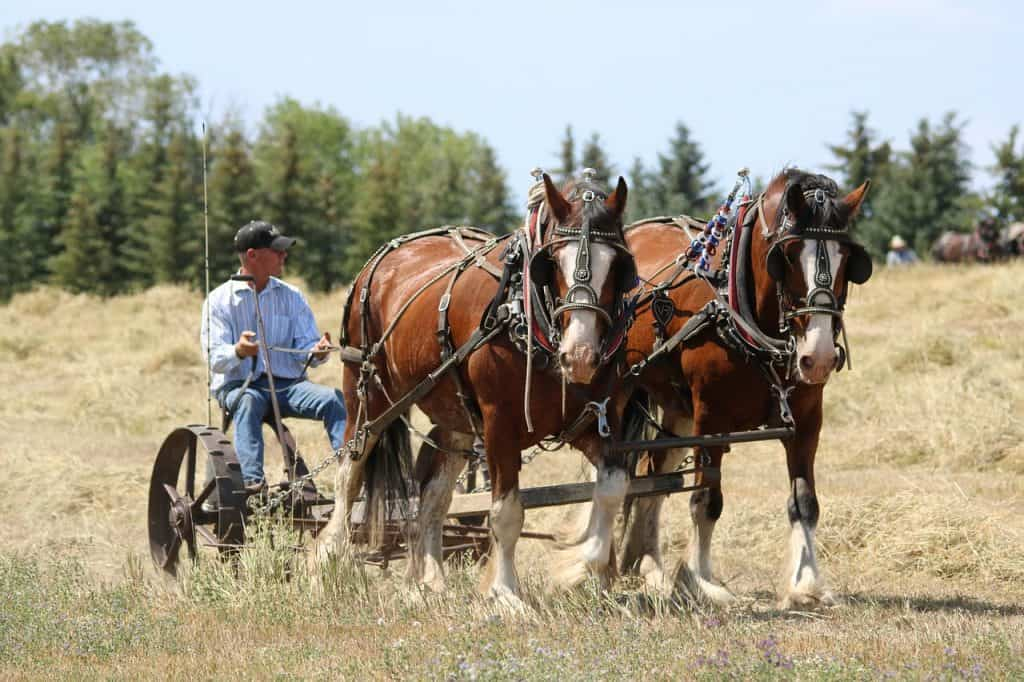 Clydesdale horse history